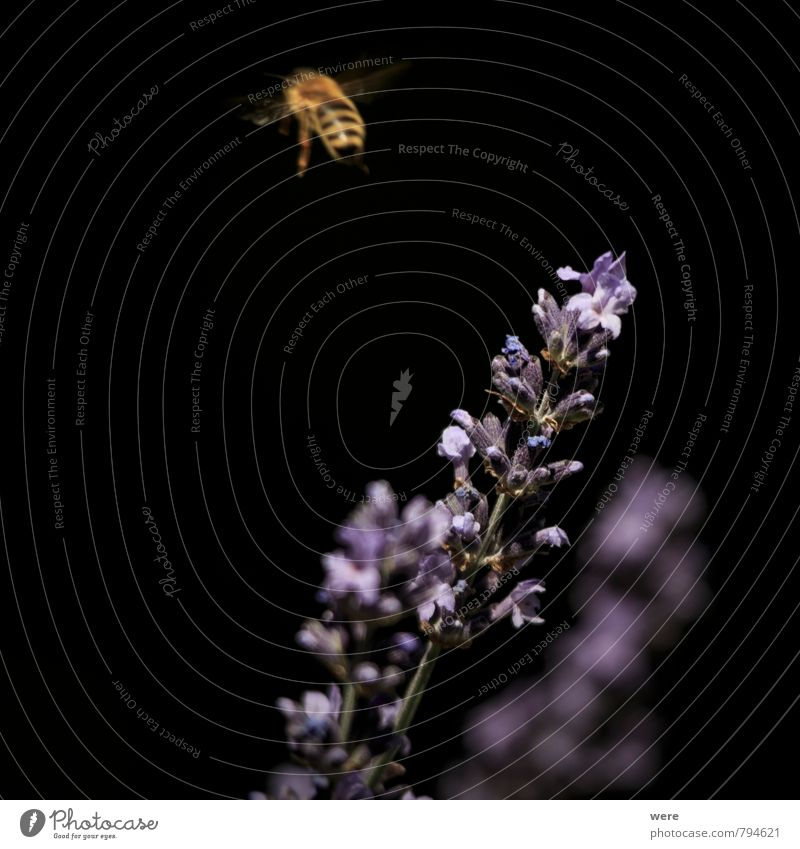 on to the next Honey Honey bee Breakfast Organic produce Bee-keeper Bee-keeping Nature Plant Animal Flower Eating Flying Carrying Diligent Endurance Insect