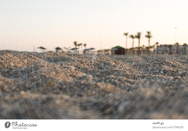 Evening at the beach Vacation & Travel Tourism Trip Adventure Far-off places Freedom Summer Summer vacation Sun Beach Landscape Sand Palm tree Village Deserted