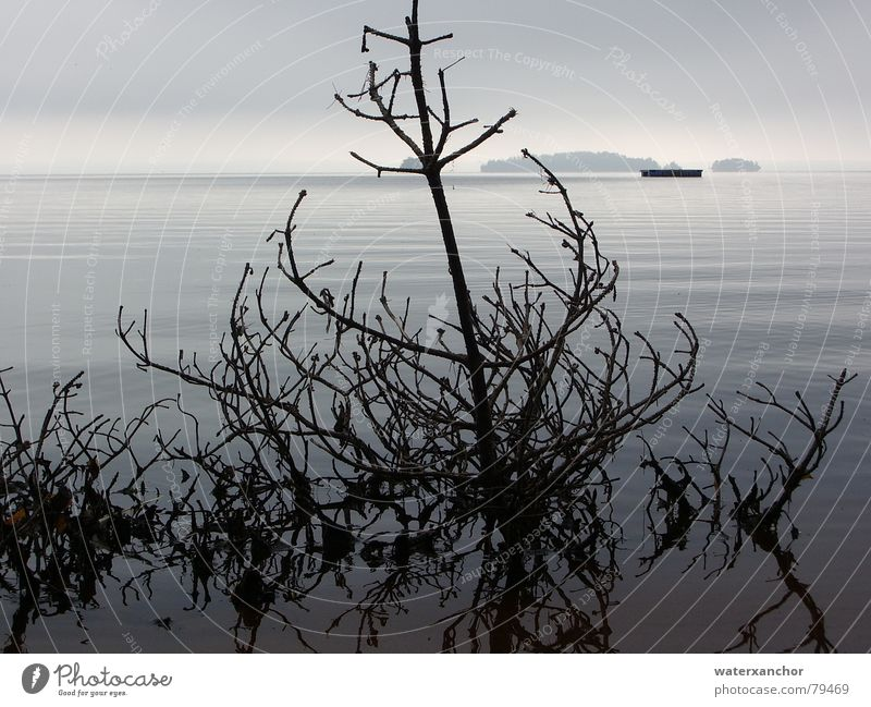 flotsam Scandinavia Lake Flotsam and jetsam Velvety Gloomy Gray Soft Beach Horizon Clouds Fog Autumn Delicate Moody Leaf small island Water Island Branch Death