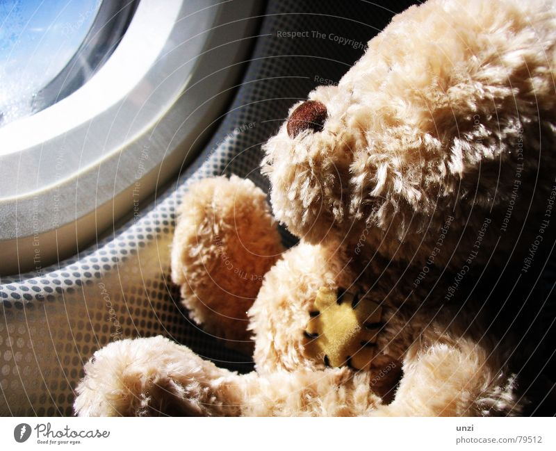 Watch the sky Teddy bear Airplane Wanderlust Dream Loneliness Hope Vacation & Travel Events Longing Joy air escort wander far and wide go up in the air Sun