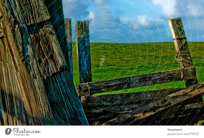 old fence Horizon Shabby Green Clouds Grass plank worn Wooden board