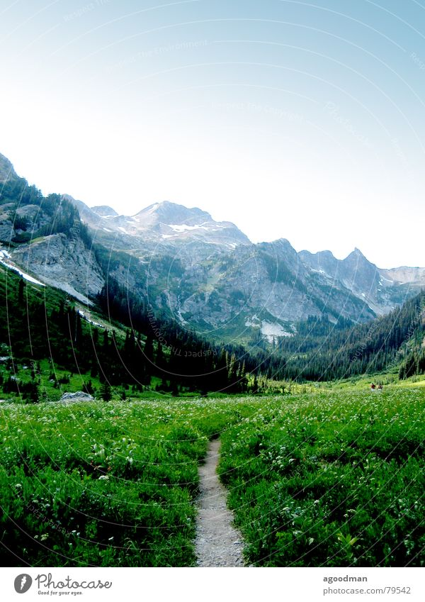 Spider Meadow Glacier National park Mountain cascades pathway wildflowers Washington DC mountains meadow trail
