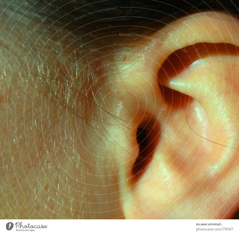 Calm Hair and hairstyles Healthy Ear Listening Pain Scream Vessel Senses Loud Skeleton Megaphone Marble Whisper Outer ear Anvil