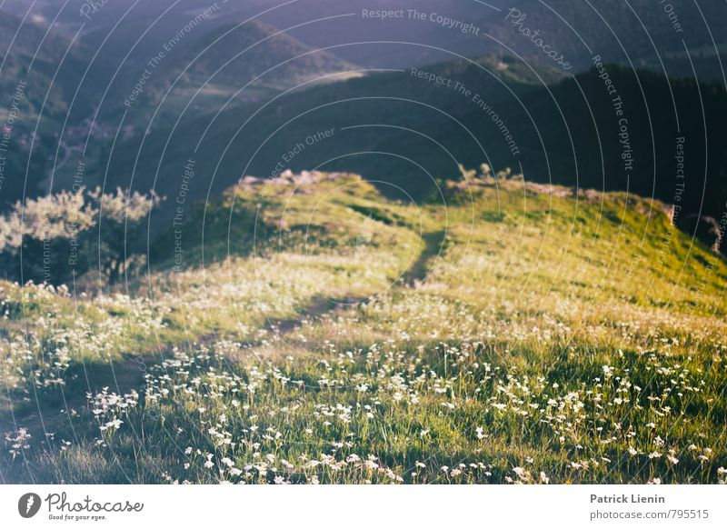 Black Forest Meadows Harmonious Well-being Contentment Senses Relaxation Calm Vacation & Travel Tourism Trip Adventure Far-off places Freedom Summer Mountain