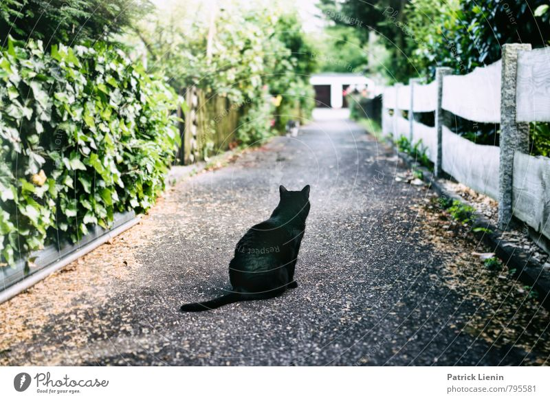 Cat Nature Loneliness Relaxation Animal Far-off places Life Movement Lanes & trails Garden Moody Contentment Esthetic Beginning Transience Longing