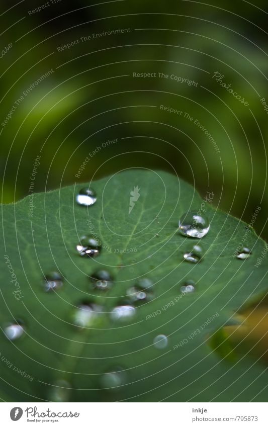 Nature Green White Water Summer Leaf Spring Natural Above Garden Lie Park Glittering Wet Drops of water Simple