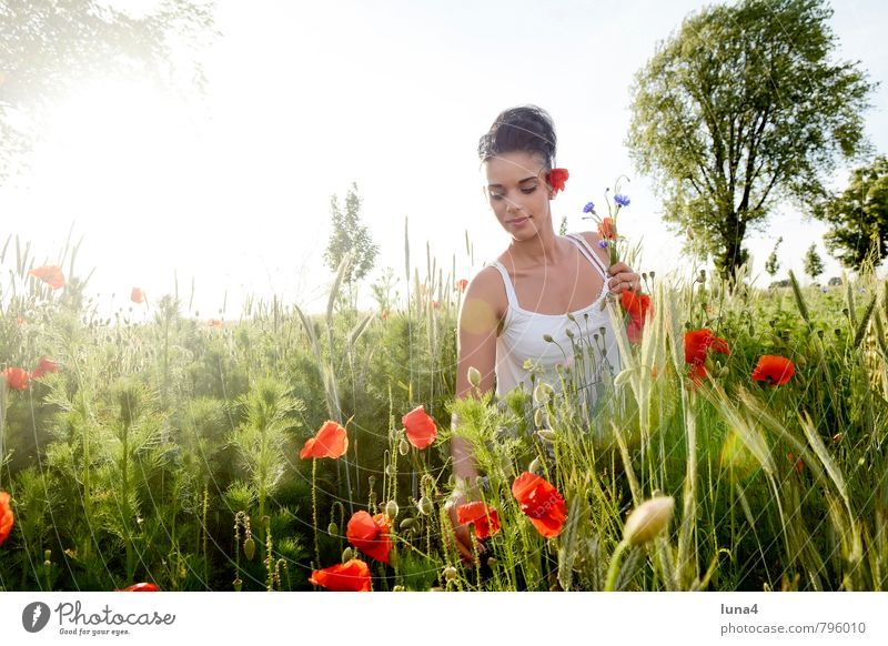 poppy Summer Feminine Young woman Youth (Young adults) Woman Adults 1 Human being 18 - 30 years Nature Spring Flower Blossom Meadow Bouquet Green Red