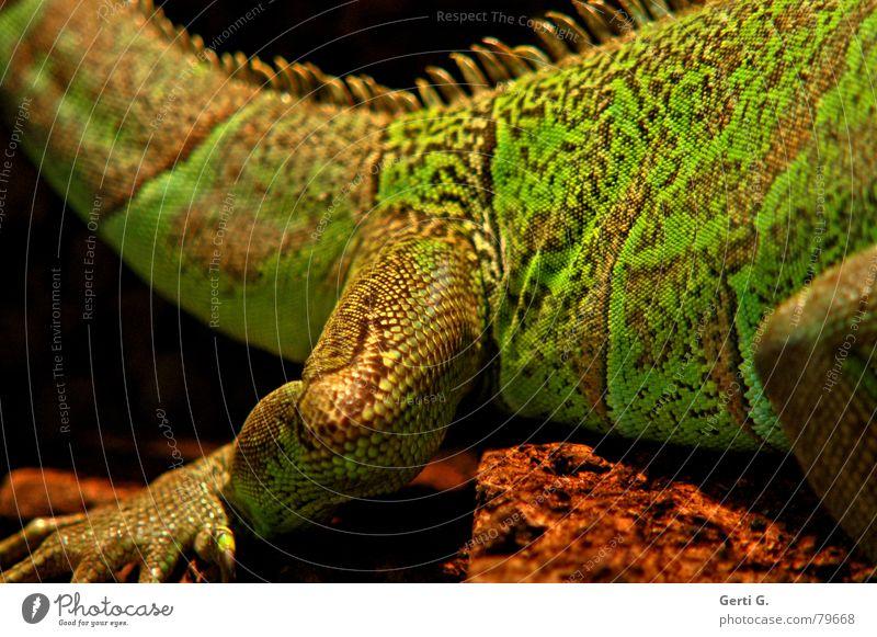 Green Calm Legs Feet Brown Skin Illuminate Wrinkles Tails Barn Reptiles Claw Defensive Leaf green Saurians Dinosaur