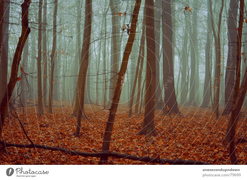 loneliness Dark Fog Forest Loneliness Creepy Empty Tree Winter Cold Gray Leaf Red December Deserted Remote Foreign Exceptional Wood flour Gloomy Heartless Vail