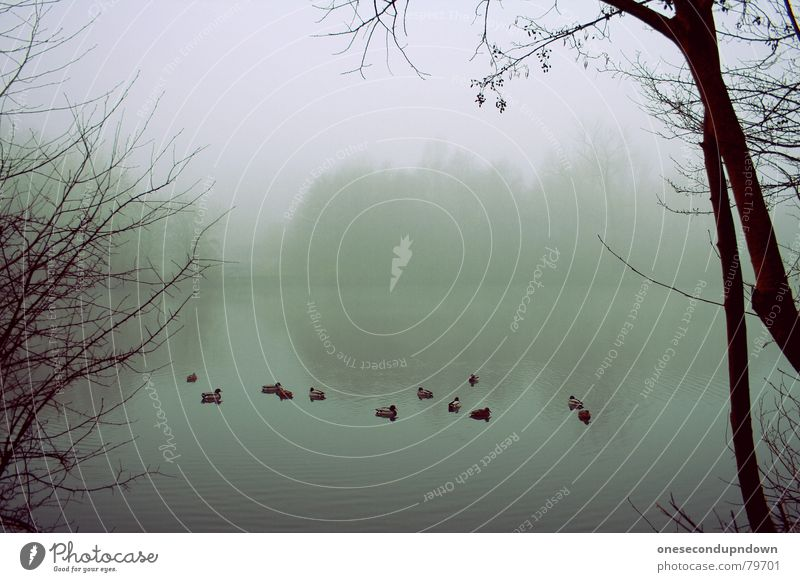 Nature Water Tree Winter Loneliness Dark Cold Gray Sadness Lake Landscape Ice Coast Fog Empty Grief