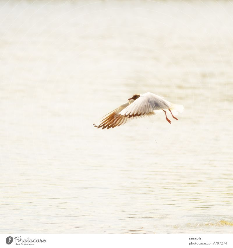 Seagull Nature Water Ocean Animal Coast Flying Bird Wild Waves Feather Wing Hunting North Sea Story Beak
