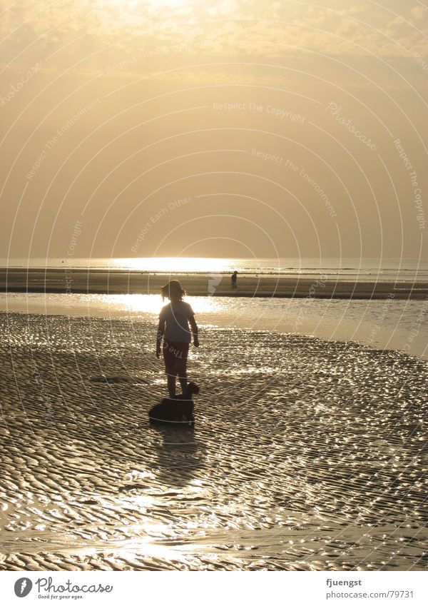 Human being Water Ocean Beach Loneliness Lake Orange Coast Multiple North Sea Dusk Mud flats Bathing place Maximum
