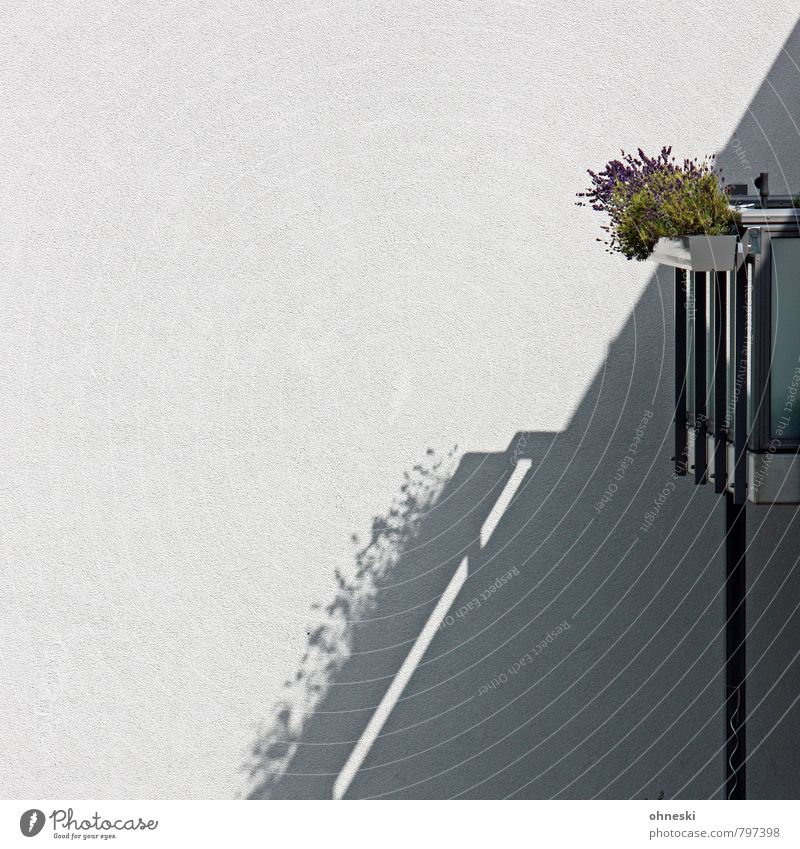 Plant Flower House (Residential Structure) Wall (building) Wall (barrier) Facade Living or residing Balcony Balcony plant