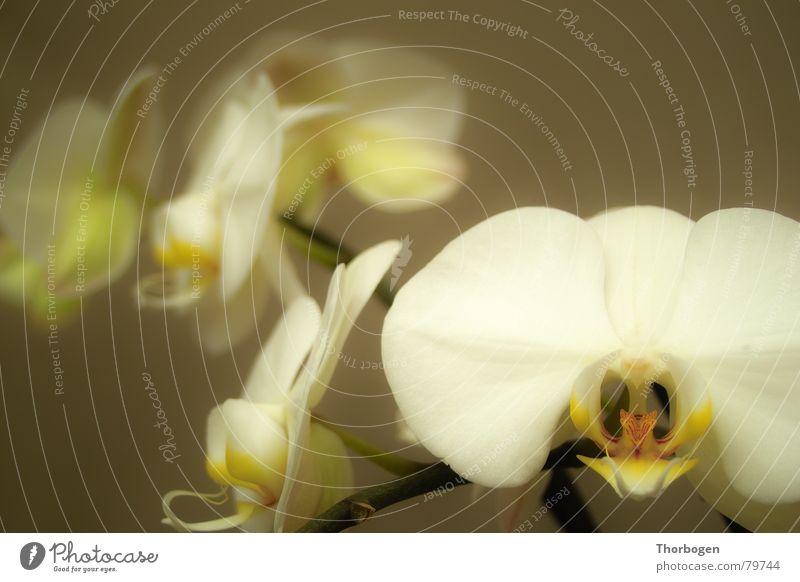 Orchid 2 Blossom Flower Plant Florist Botany flower stalk Nature Pistil