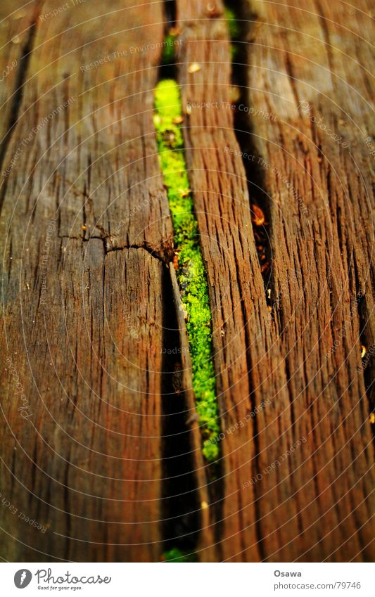 niche existence Life Crack & Rip & Tear Wood Seam Plant Green Botany Joie de vivre (Vitality) Wood grain Symbiosis Rustic Old Happiness Vigor
