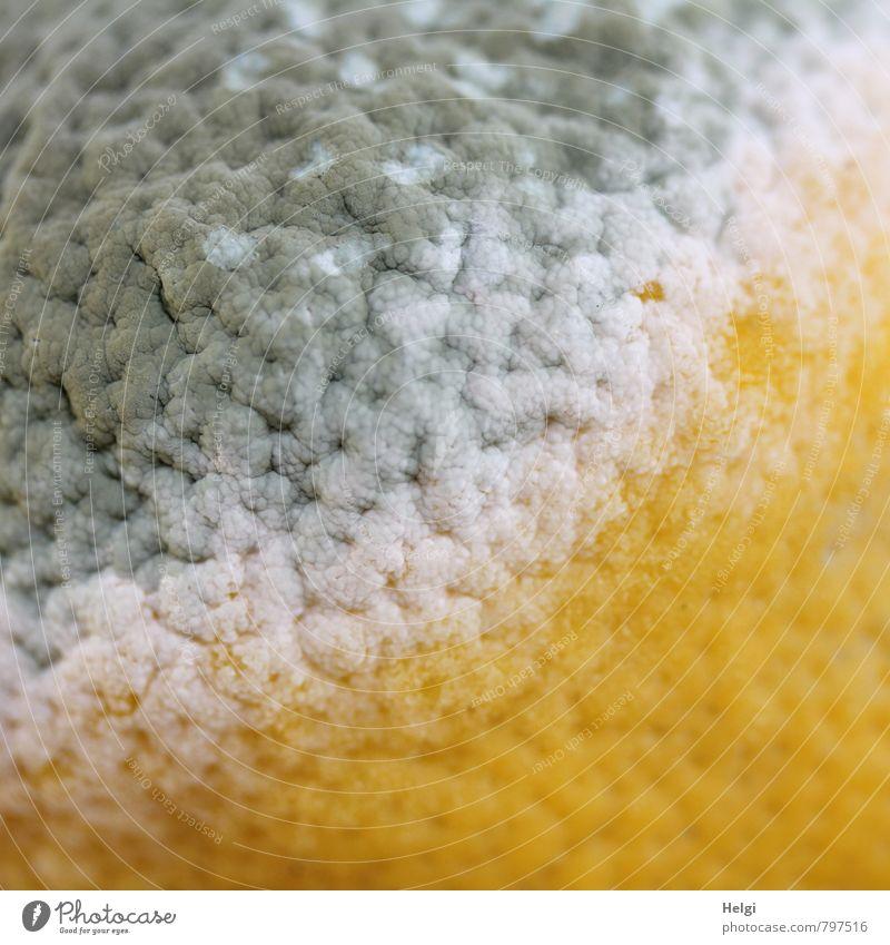 metamorphic Food Fruit Lemon Lemon peel Nutrition Old Authentic Exceptional Simple Disgust Natural Sour Yellow Gray White Dangerous Senior citizen Bizarre