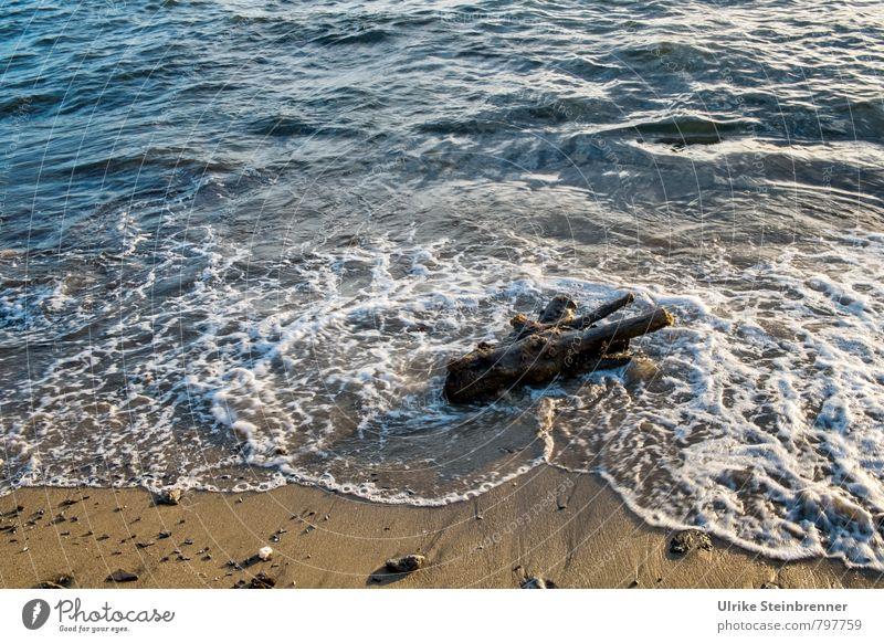 moisture | flotsam and jetsam Vacation & Travel Tourism Summer Summer vacation Beach Ocean Island Waves Nature Landscape Beautiful weather Coast Sardinia Wood