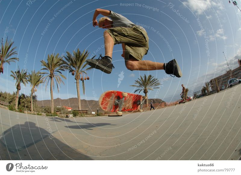 Youth (Young adults) Vacation & Travel Ocean Joy Playing Style Air Park Brown Island Lifestyle Asphalt Skateboarding Palm tree Skateboard Hip & trendy