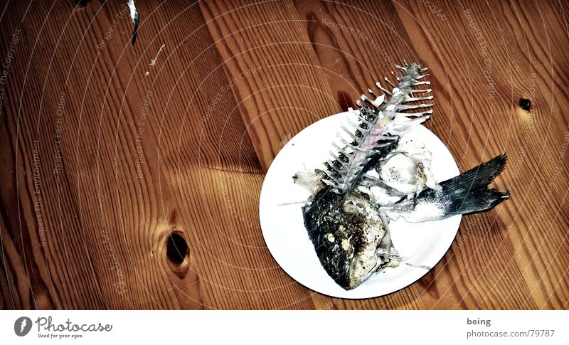 Coast Lake Fresh Nutrition Fish Cooking & Baking Derelict Gastronomy North Sea Baltic Sea Bay Restaurant Fishing (Angle) Plate Mediterranean sea Meat