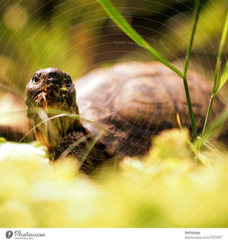 The Oracle Animal 1 To feed Turtle Tortoise Old Experience Age Reptiles Neck Wrinkle Shell Lettuce Green Colour photo Exterior shot Light Shadow Contrast Blur