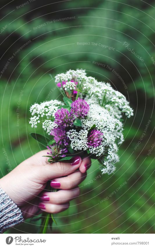 Thank you Plant Spring Summer Flower Blossom Clover blossom Blossoming Happiness Fresh Green Violet Pink White Bouquet Picked Hand Give flowers Donate