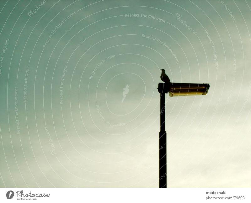 Sky Blue Calm Animal Loneliness Gray Lamp Bird Sit Aviation Gloomy Lantern Street lighting Decent Impression