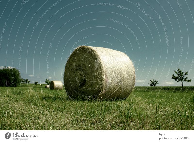 Compacted straw Glade Field Straw Summer Meadow Agriculture Tree Edge Horizon Work and employment Clouds Green Grass Sky Blade of grass Harvest Blue Shadow