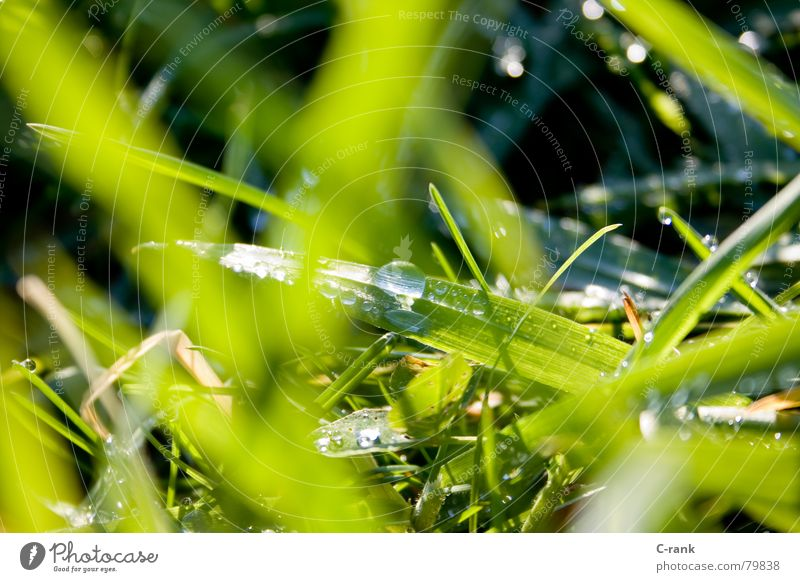 Water Green Cold Meadow Grass Drops of water Fresh Clarity Dew Blade of grass Fight Full Fleeting