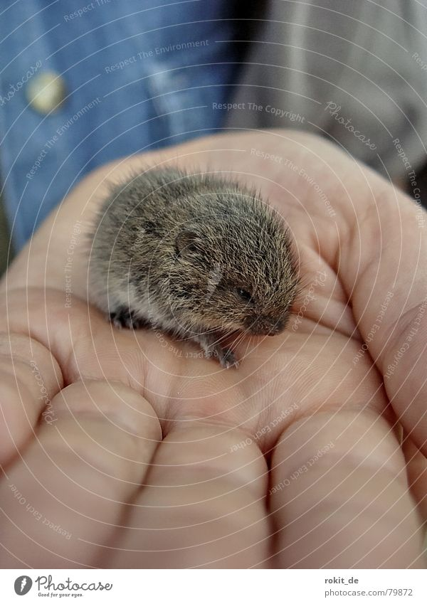 Lemming, or is it a mouse? Human being Hand Fingers Animal Pelt Mouse Claw Paw Small Cute Sweet Blue Gray Protection Safety (feeling of) Fear Mammal Fragile