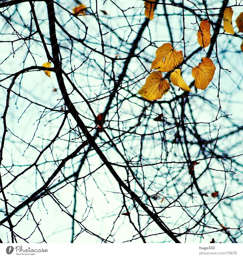 Falling leaves... 2 Wood Autumn Leaf Hang Empty Green Yellow Tree Light Biology Photosynthesis Goodbye Autumn leaves Muddled Nature Wood flour Azure blue Grief