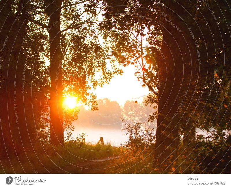 Nature Summer Sun Calm Forest Warmth Autumn Spring Orange Fog Idyll Illuminate Esthetic Warm-heartedness Friendliness Uniqueness