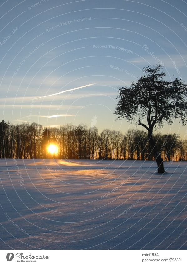 winter sun Winter Sunset Tree Evening Celestial bodies and the universe Sky Snow Landscape Blue heaven Dusk