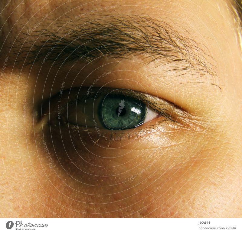 Blue Face Eyes Near Eyelash Eyebrow Pupil Iris Pore Eye colour