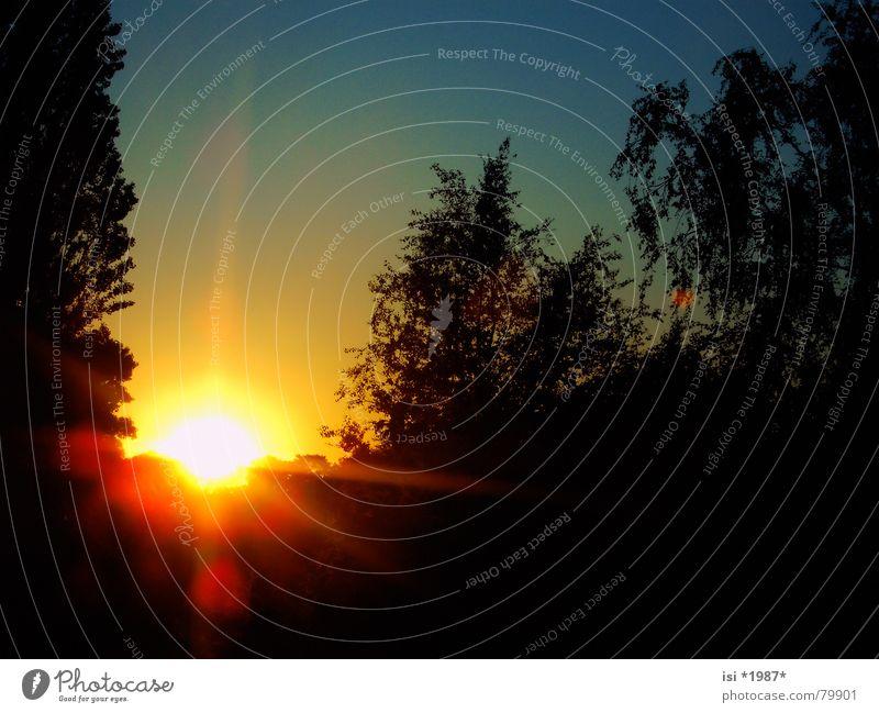 Sky Tree Sun Blue Yellow Far-off places Autumn Lighting Power Orange Stars Glittering Force Romance Dusk Paradise