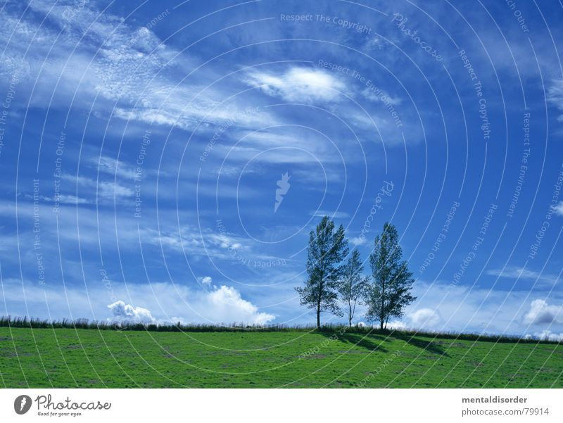 Three Freedom Clouds Air Celestial bodies and the universe Tree Grass Agriculture Breathe Tree trunk Pasture Grass surface Meadow Green space Tree structure