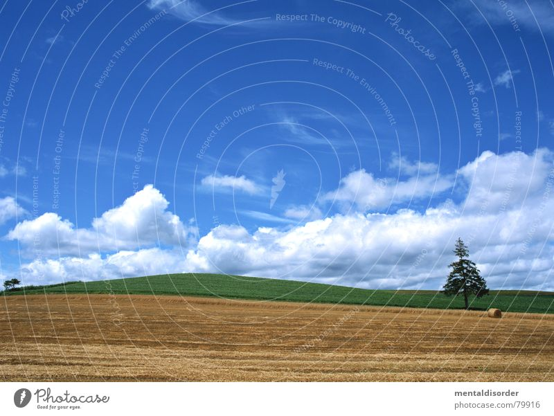 Sky Tree Green Blue Vacation & Travel Clouds Meadow Grass Freedom Air Trip Lawn Grass surface Agriculture Pasture Tree trunk