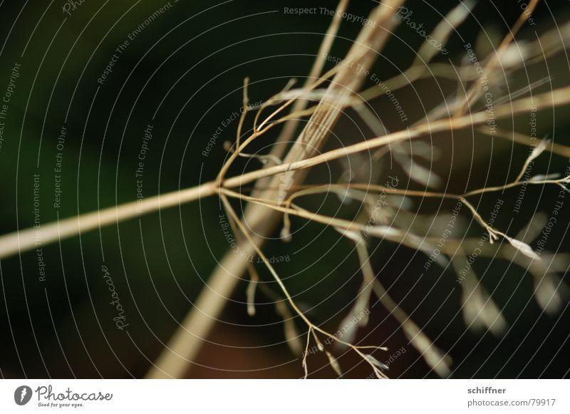 Winter Meadow Death Grass Wind Crazy Thin Dry Diagonal Blade of grass Grassland Tilt