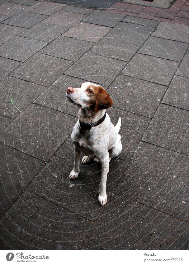 Dog Gastronomy Appetite Sidewalk Mammal Café Loyalty Compassion Sidewalk café Beg Puppydog eyes