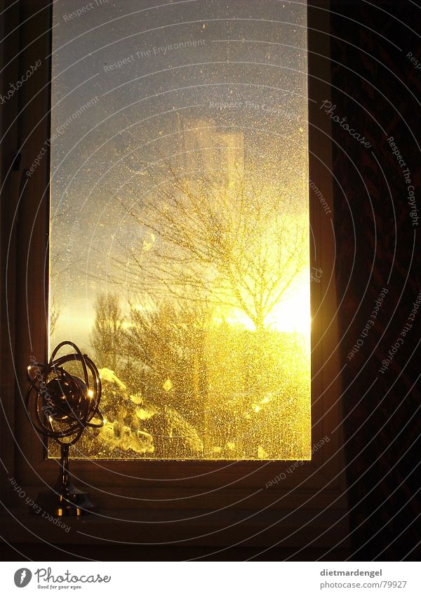 Tree Yellow Window Dirty Gold Fantastic Sunset Globe Dusk Heavenly Shop window Venetian blinds Impressive Shutter Celestial bodies and the universe
