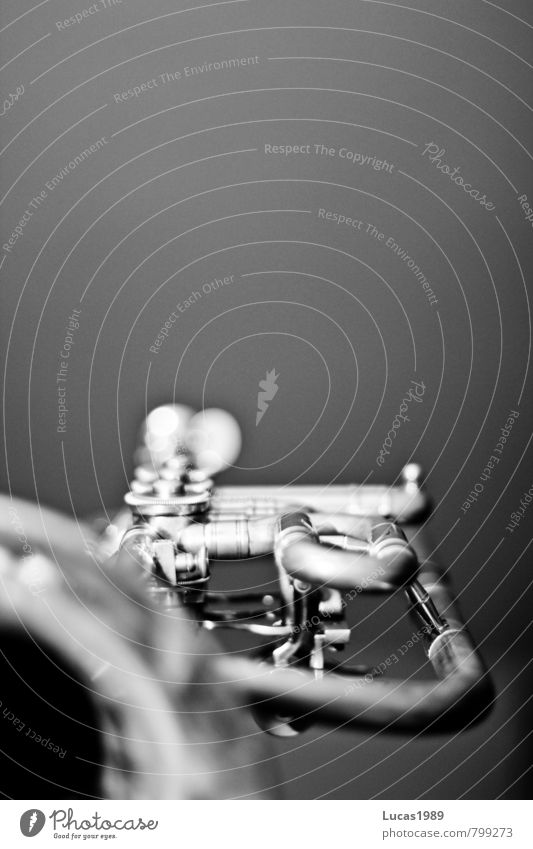 flugelhorn Music Trumpet Musical instrument Metal Playing Passion Diligent Black & white photo Close-up Deserted Copy Space top Copy Space middle