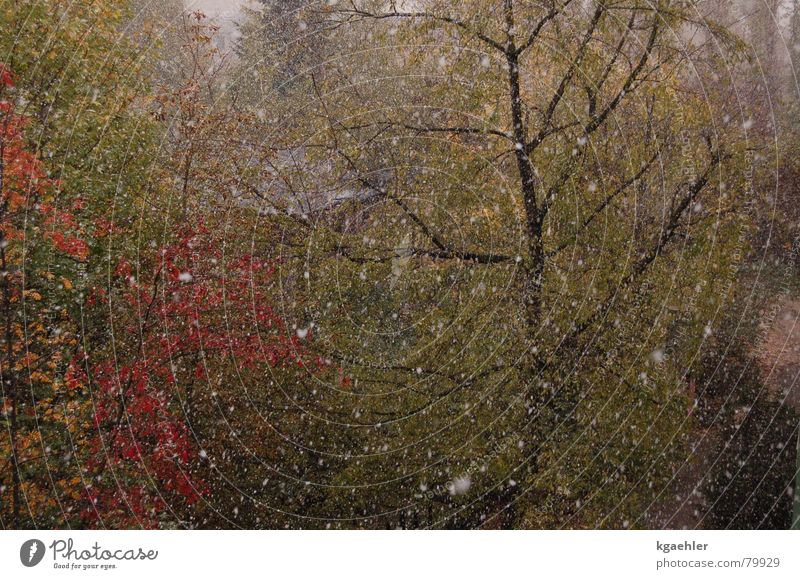 Winter is coming Autumn Tree Leaf Wet Fast-flowing stream Damp Gush of water Hail Rain Water