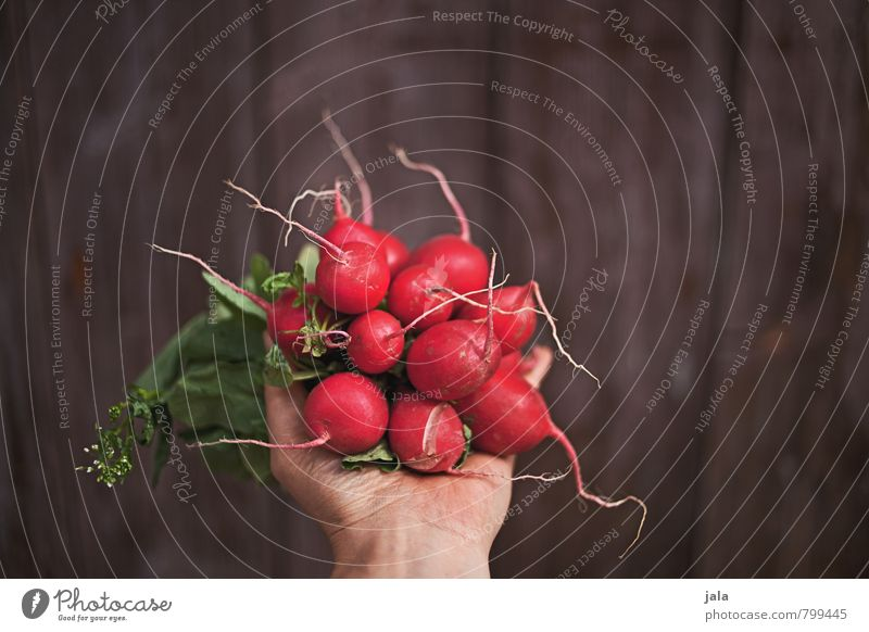 radish Food Vegetable Radish Nutrition Organic produce Vegetarian diet Healthy Eating Feminine Hand Fresh Delicious Natural Tangy Root vegetable Wooden wall