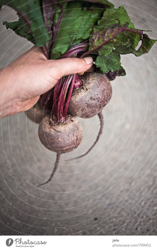 beetroot Food Vegetable Red beet Nutrition Organic produce Vegetarian diet Healthy Eating Feminine Hand To hold on Simple Fresh Good Delicious Natural