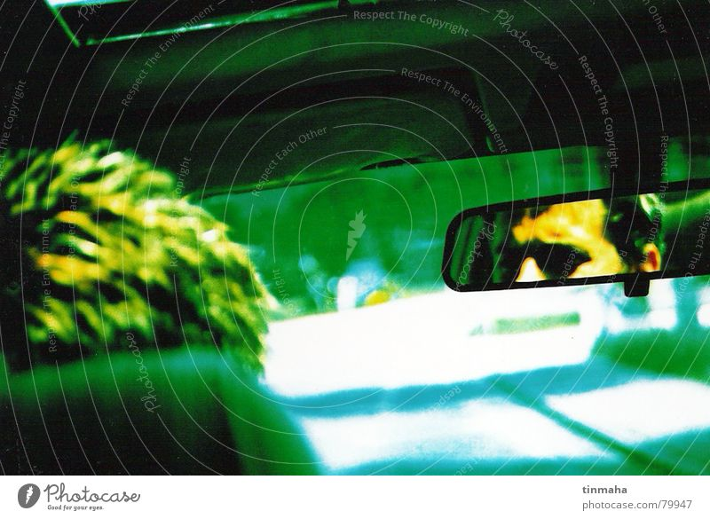 driving the car Movement Driving Rear view mirror Reflection Driver Loneliness Green Yellow Country road Perspective Car Road traffic Doomed Carriage Driveway
