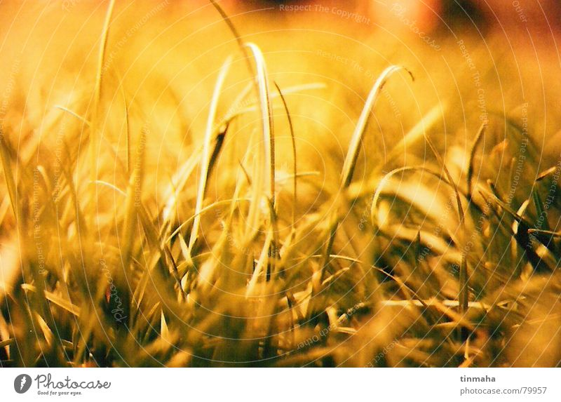Green Sun Summer Joy Yellow Relaxation Life Meadow Autumn Grass Wind Peace Grass surface To enjoy Sunbathing Grassland