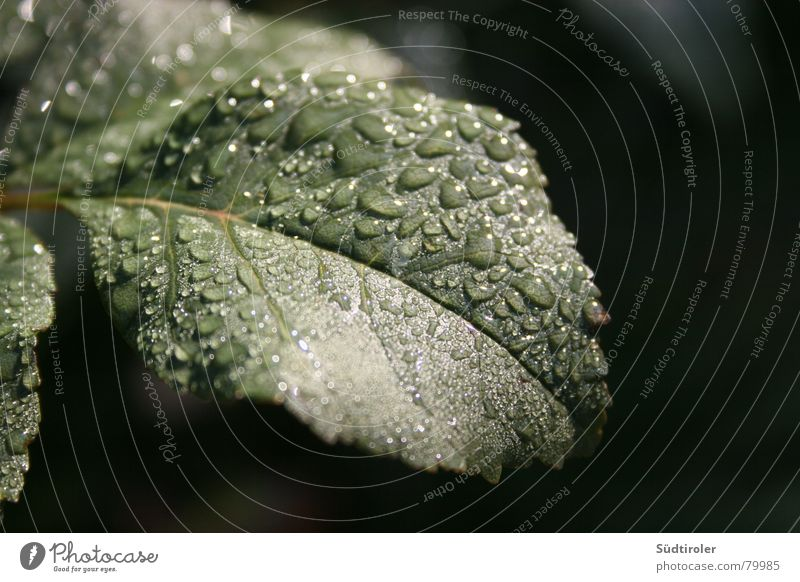 raindrops on leaf Rachis Leaf Rain Apple tree Wet Damp Drops of water