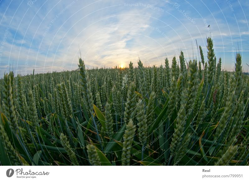 Nature Blue Plant Green Summer Sun Grass Food Earth Orange Field Beautiful weather Round Agriculture Grain