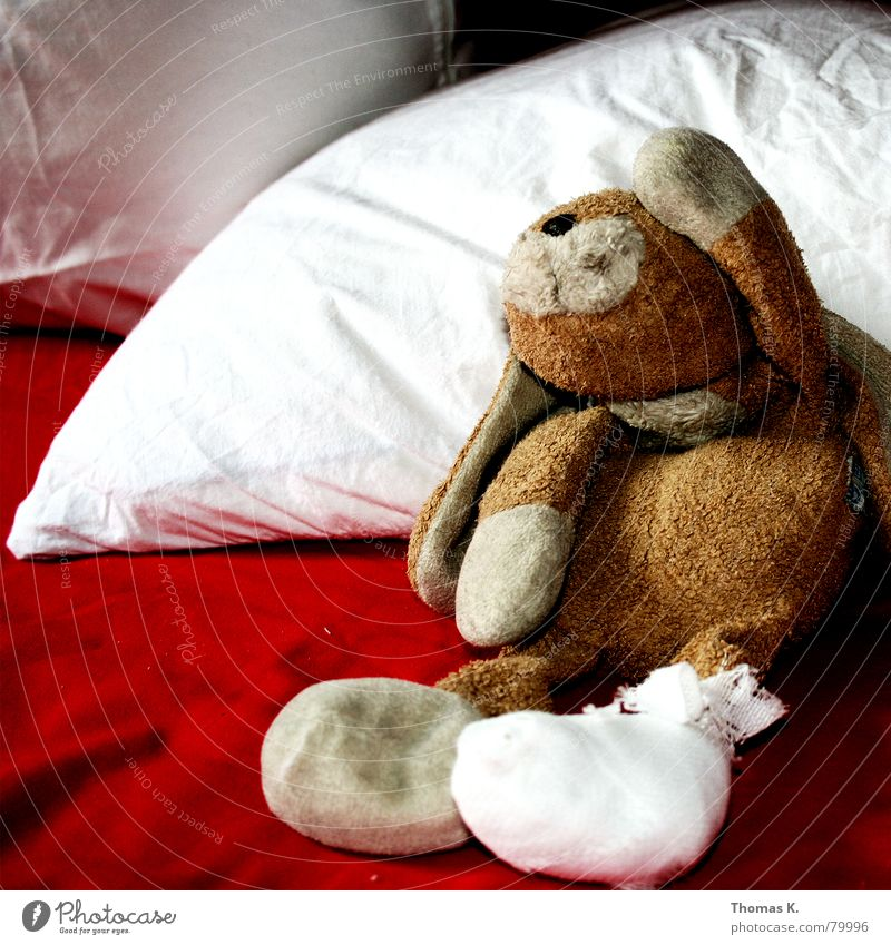 Red Animal Sadness Feet Brown Infancy Growth Grief Cloth Soft Wrinkles Illness Pain Hospital Hare & Rabbit & Bunny Distress