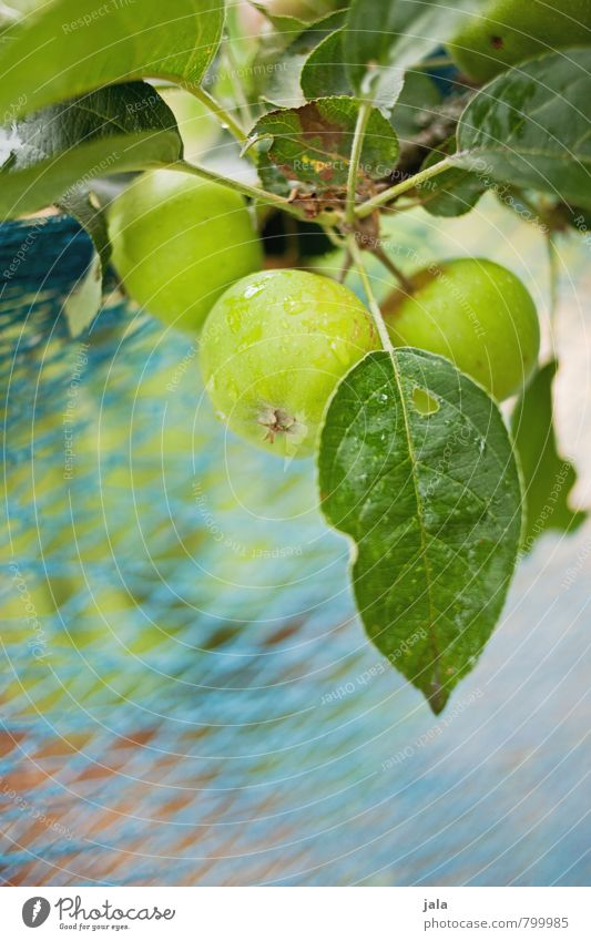 apples Healthy Eating Nature Plant Summer Tree Foliage plant Agricultural crop Apple tree Garden Esthetic Fresh Delicious Natural Colour photo Exterior shot