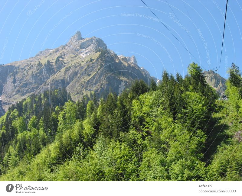 Sky Summer Forest Mountain Beautiful weather Cable Driving Blue sky Mixed forest Pilatus